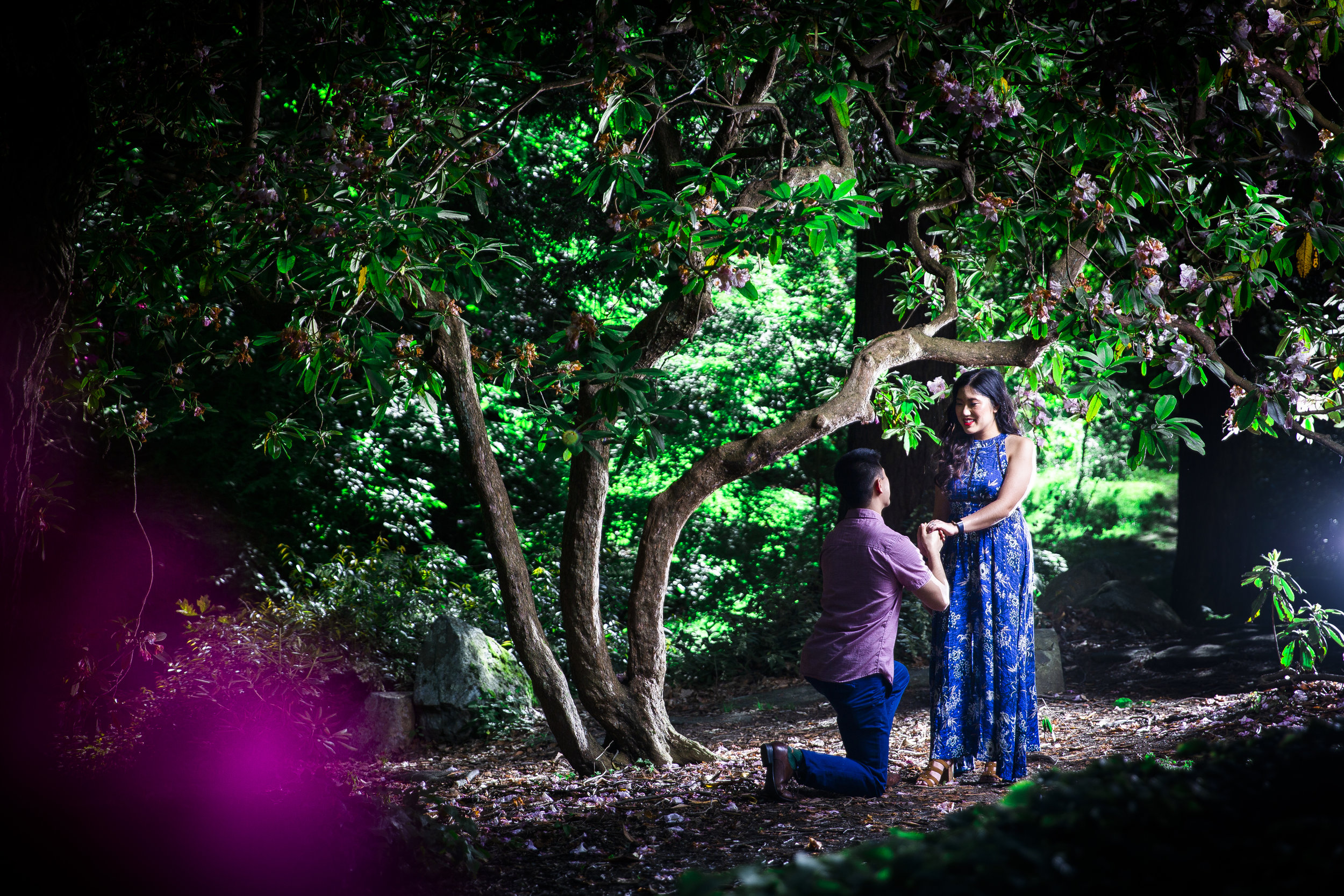 8C2A1889+Giovanni The Photographer+Best Boston Engagement Photography+Arnold Arboretum.jpg