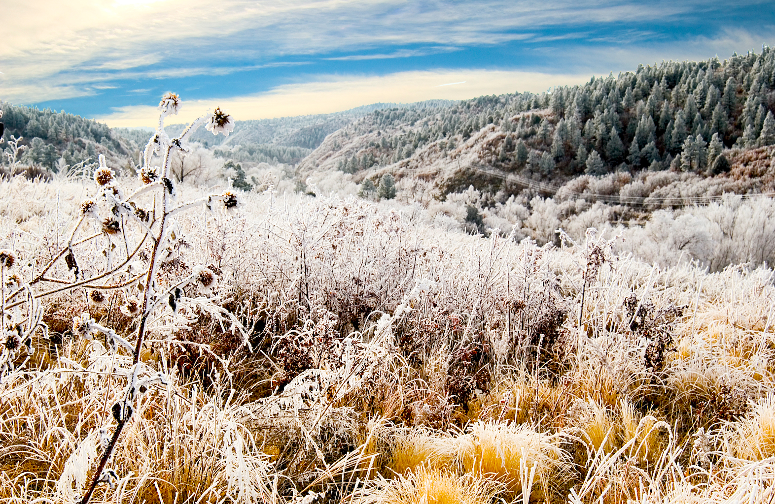 Mountain Frost
