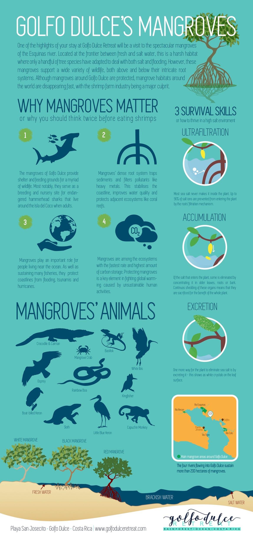 MANGROVES 2.jpg