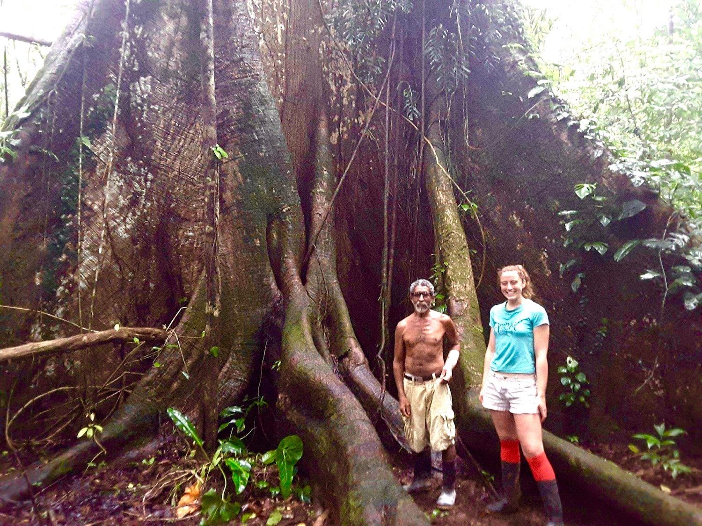 Majestic Ceiba