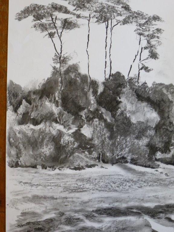 Trees-at-Trebah_576.jpg