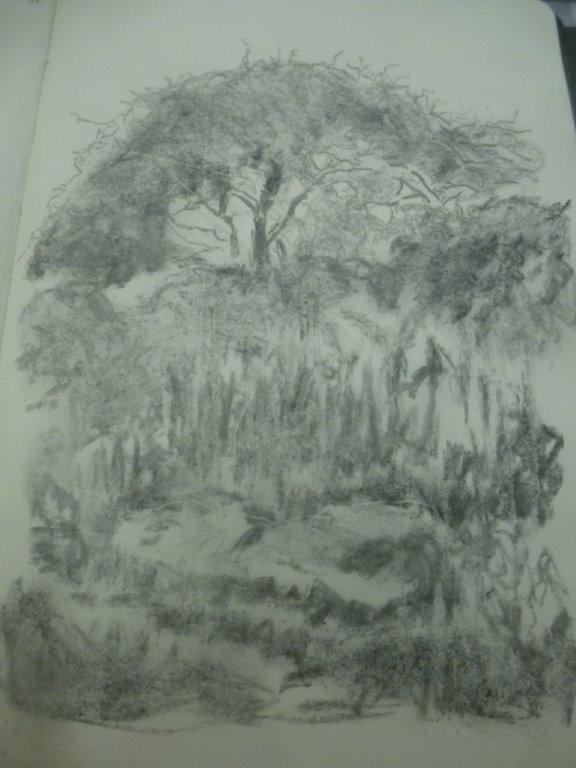 12.Cornish-tree-and-hedge_7_576.jpg