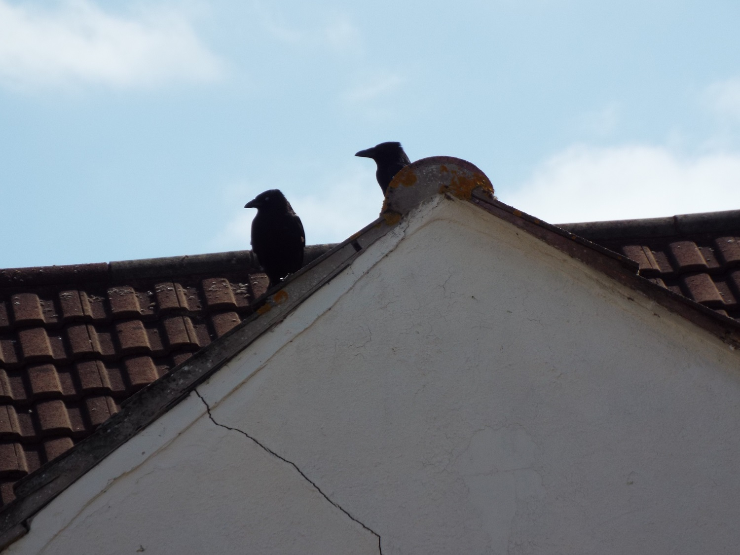 They're watching their fledgling