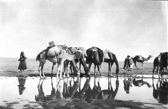 Gertrude Bell's caravan - men and camels at watering place, Saudi Arabia, January 1914 (Credit: Gertrude Bell Archive, Newcastle University)