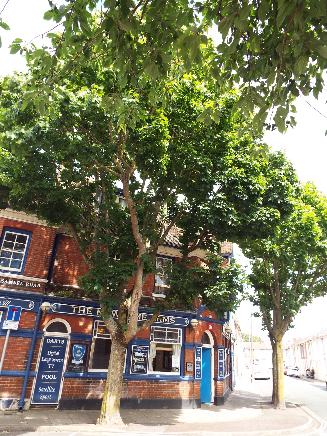 Newcome Arms and sycamore trees, Fratton, Portsmouth - a car and tarmac environment