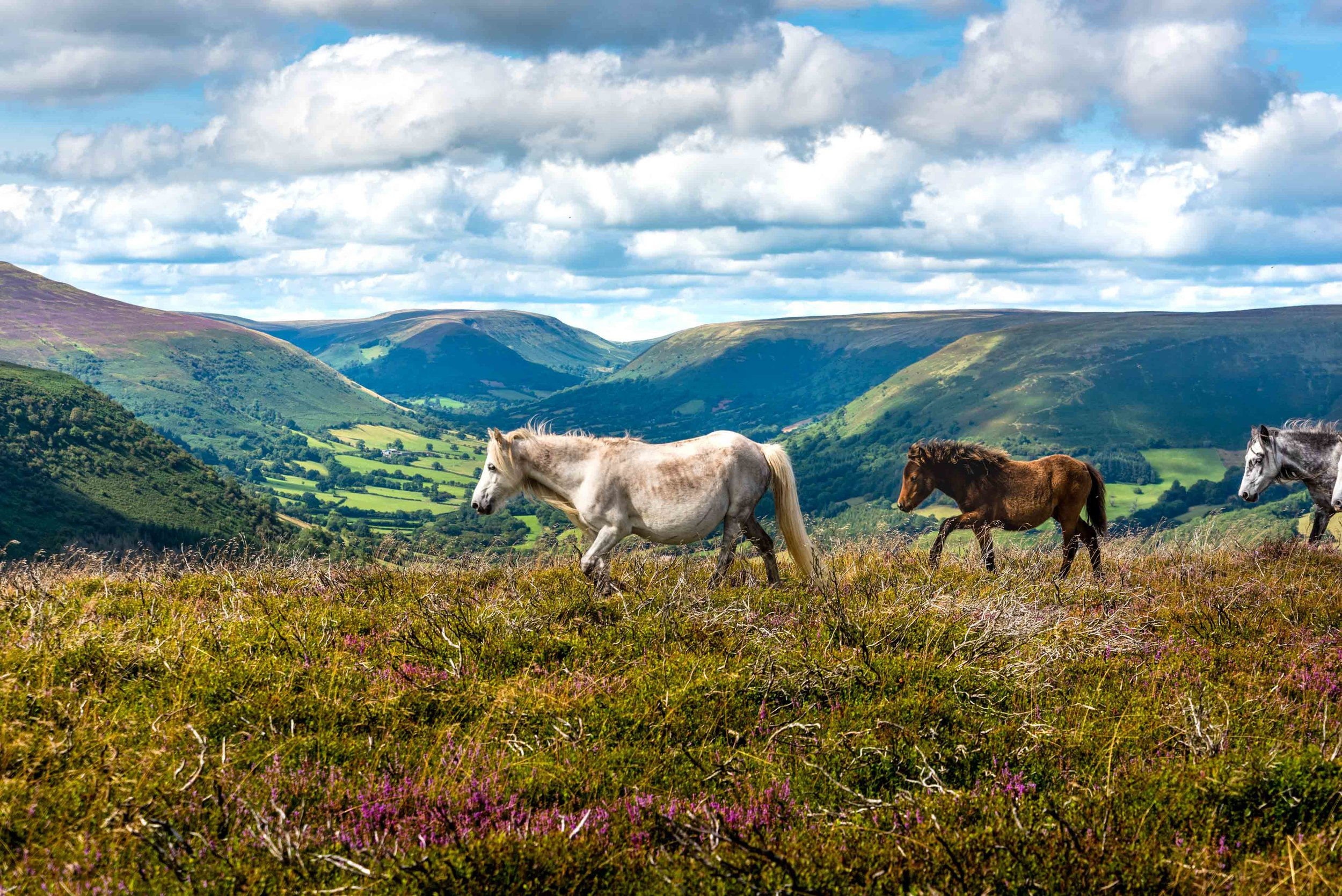 Wild Ponies Llantony-6323.jpg