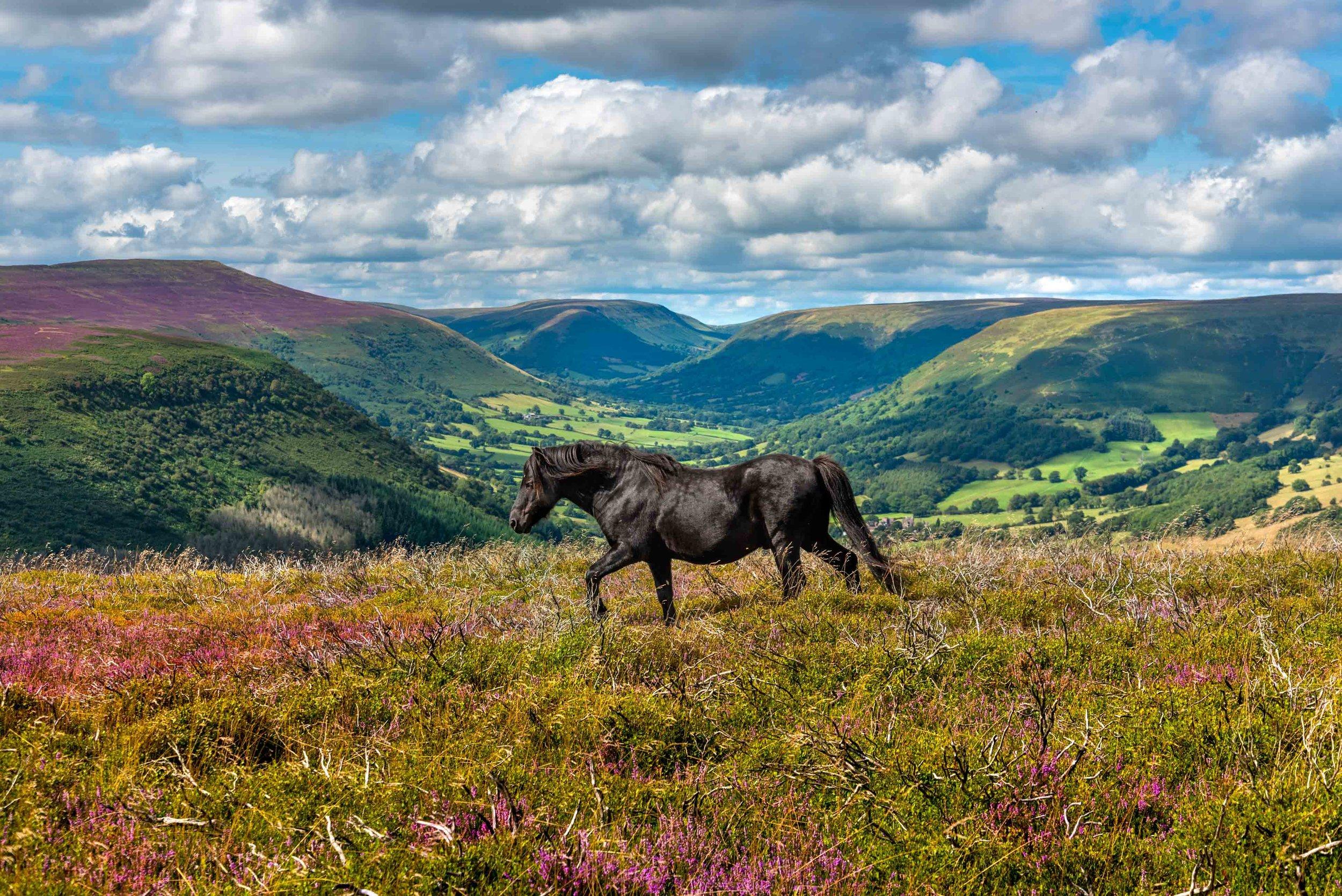 Wild Ponies Llantony-6330.jpg