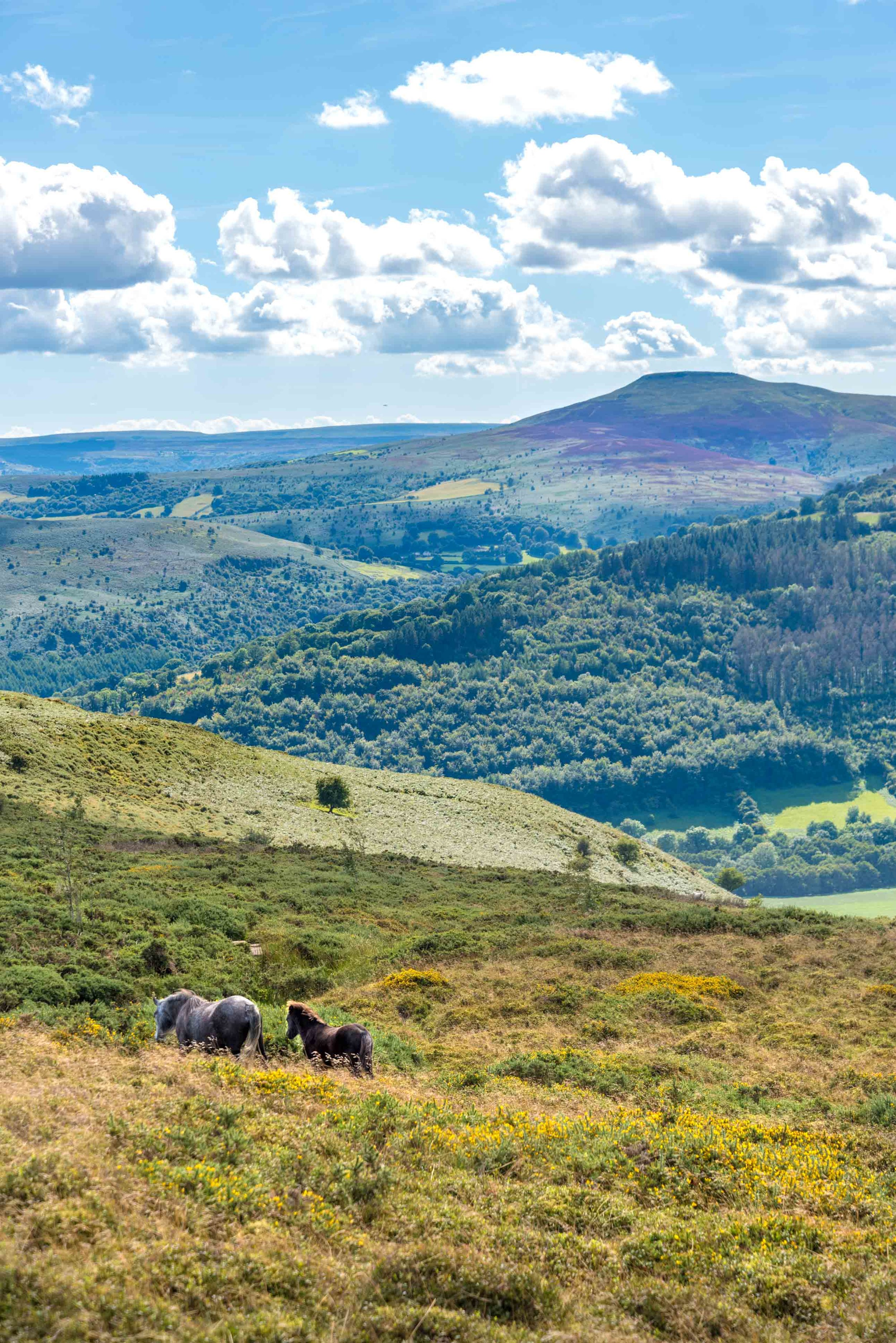 Wild Ponies Llantony-6361.jpg