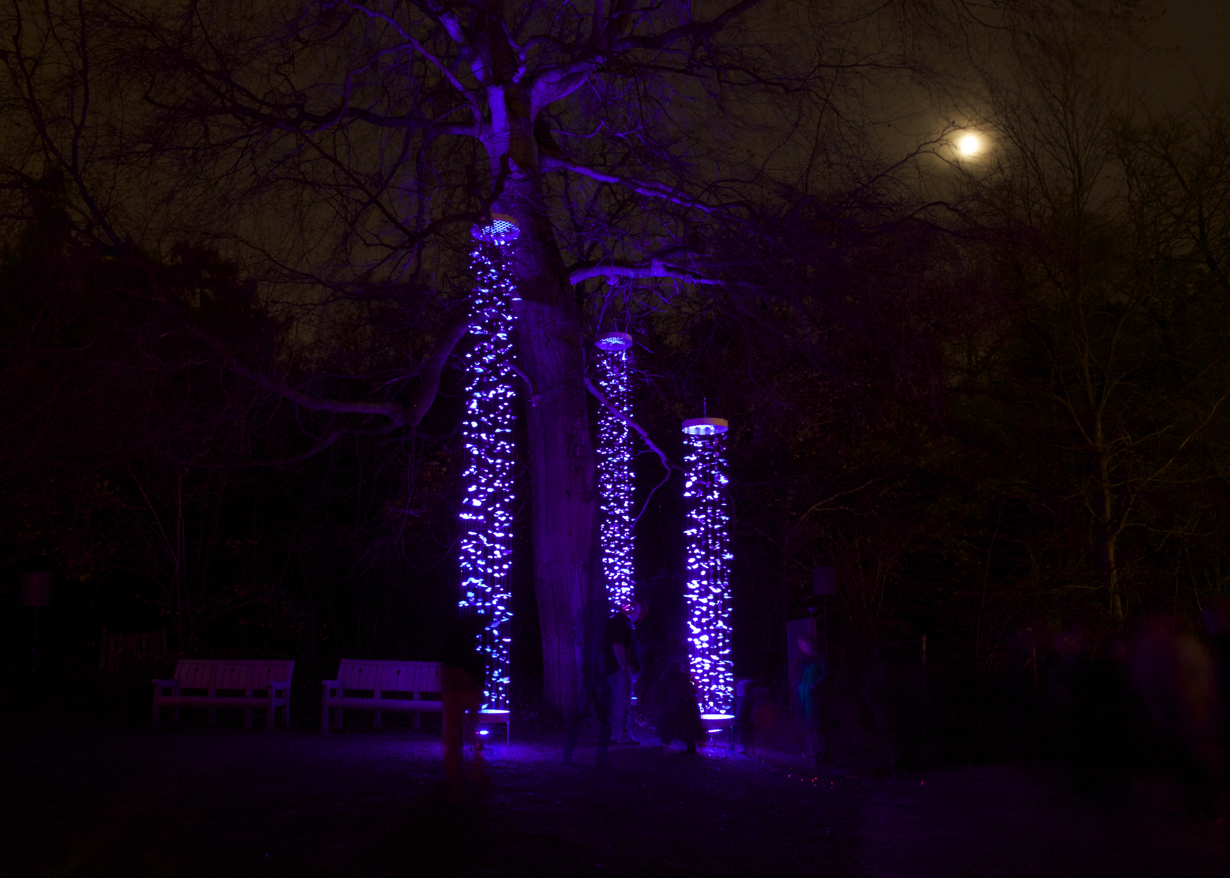 Supernature; a sculptural porcelain light installation and soundscape celebrating the London 2012 Olympics.