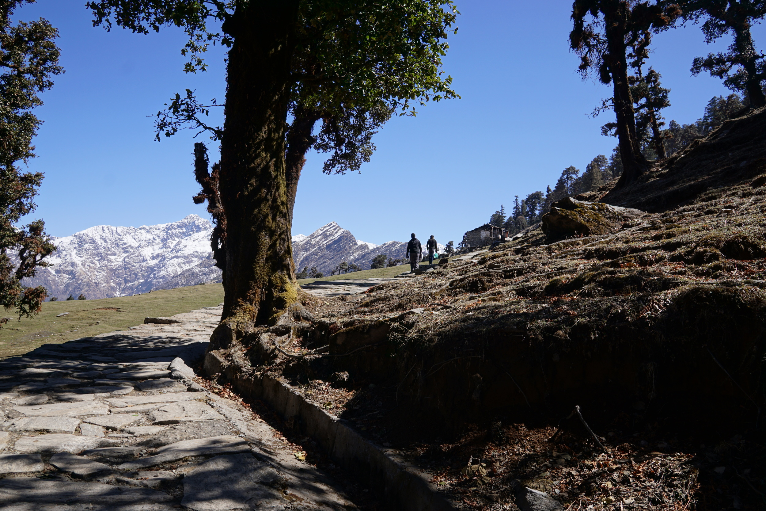 A paved path lined with perfect green trees illuminated by the peaks in the horizon.