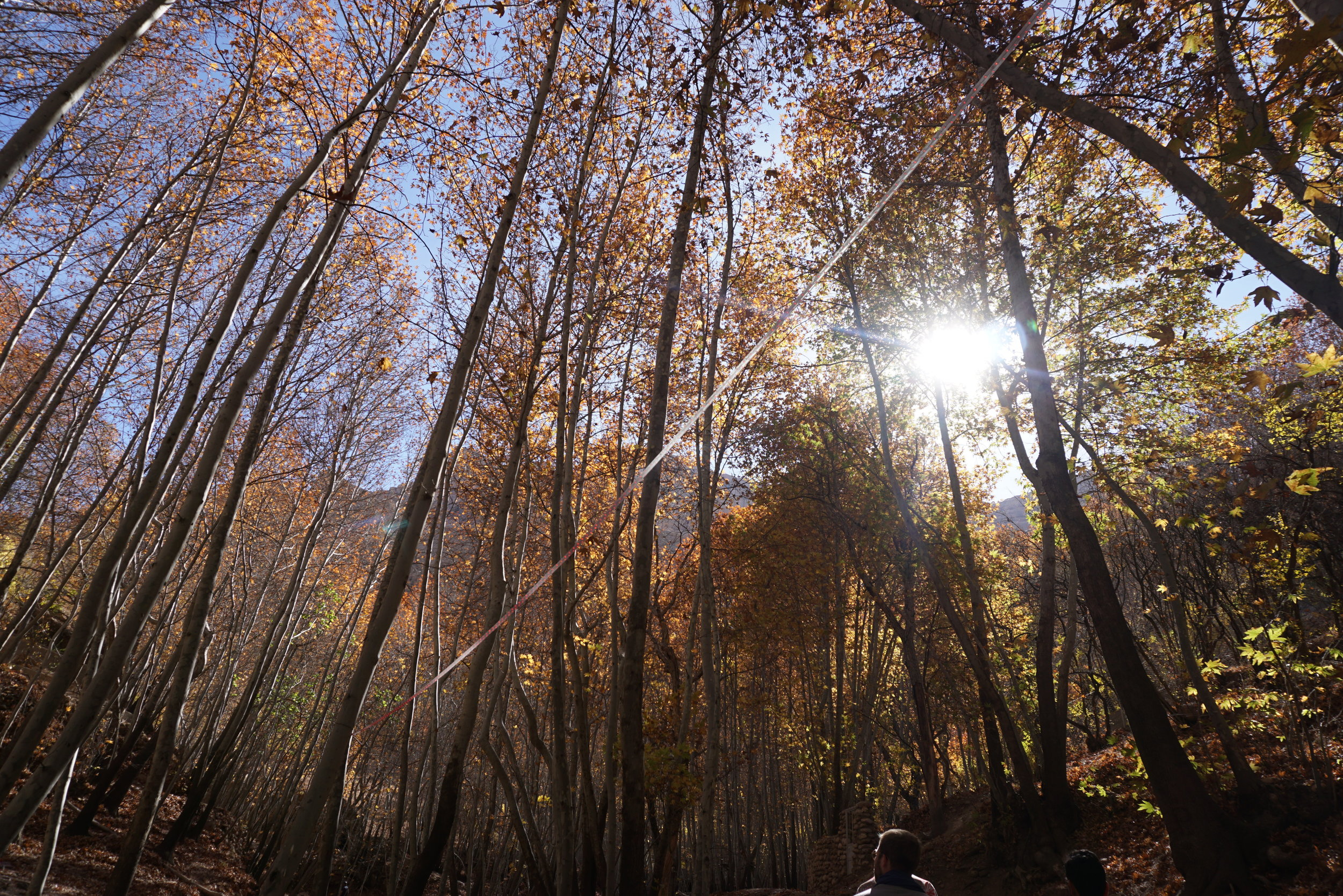 The trees in Iran are quite special and Iranians love spending time among these magical forests in Autumn.