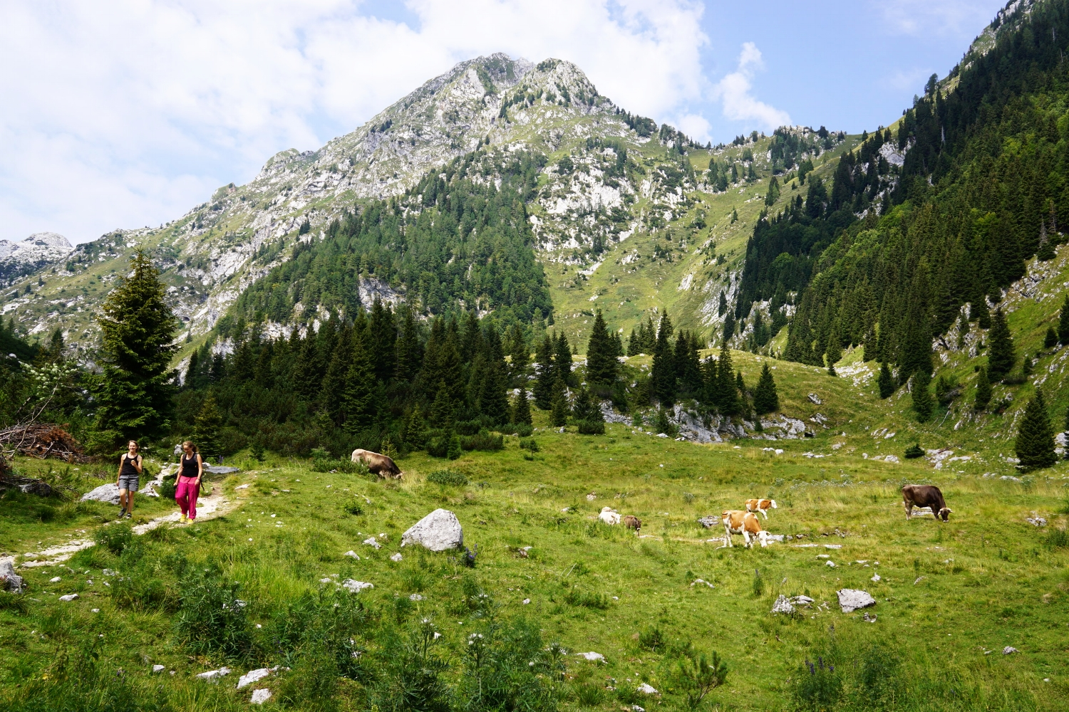 Stunning open meadows while on our way to the Krsnko Jezero Lake