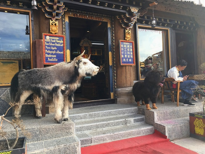 Weird-Animals-China-Off-The-Beaten-Path.jpg