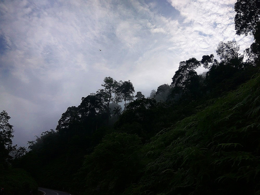 Nothing like dancing clouds falling on the tropical trees in Genting Sempah while cycling uphill.