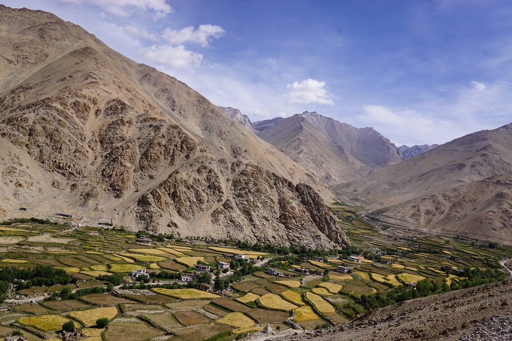 Little specs of green in a dry moonscape land in Ladakh on a road trip.
