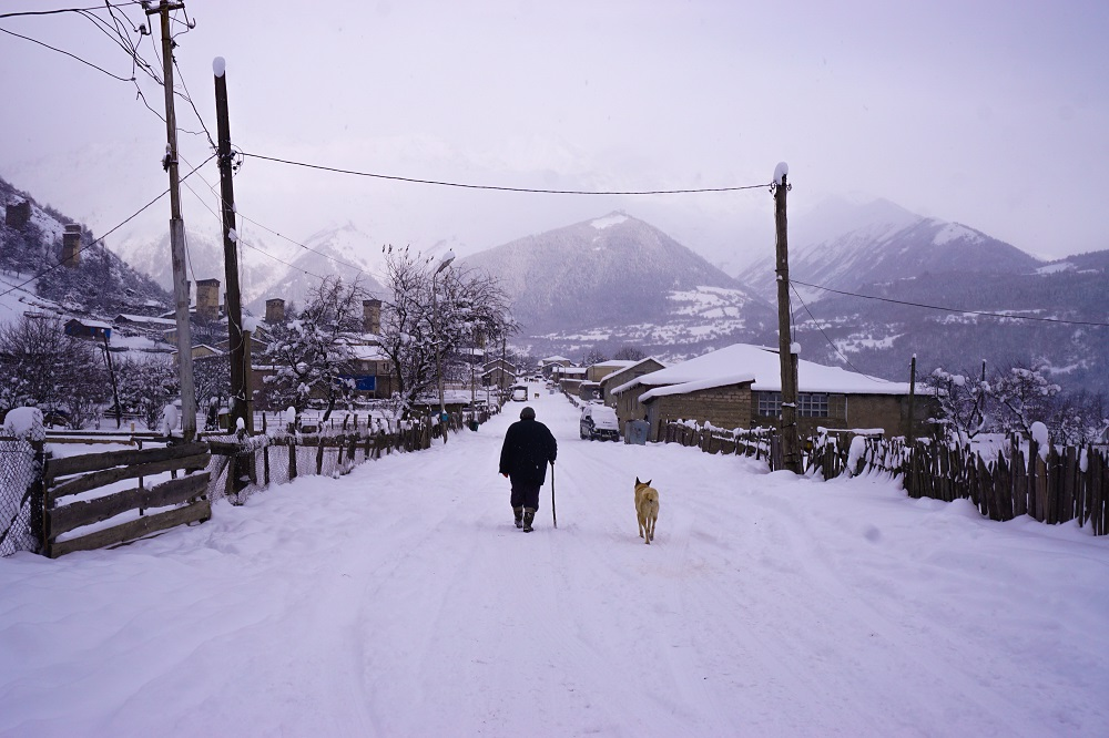 The shepherd dog silently walking through the cold winter mornings in Mestia