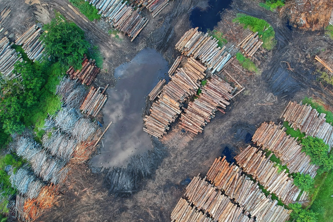 What's the point of development when we can't safeguard our forests?