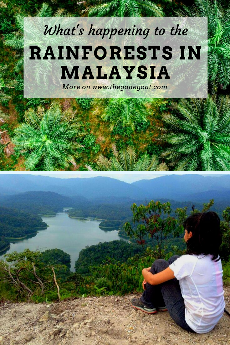 Malaysia's forests are under threat from rapid deforestation .  What's the point of staying in eco-resorts and being in nature when the rest of the country is too detached from understanding our forests and the underlying geology? Over here, I pen my thoughts on what's happening to the rainforests in Malaysia and the disappearing nomadic tribes. #Malaysia #Travel #SustainableTravel #TravelTips #Asia #Destinations #TripIdeas #Rainforests #Deforestation