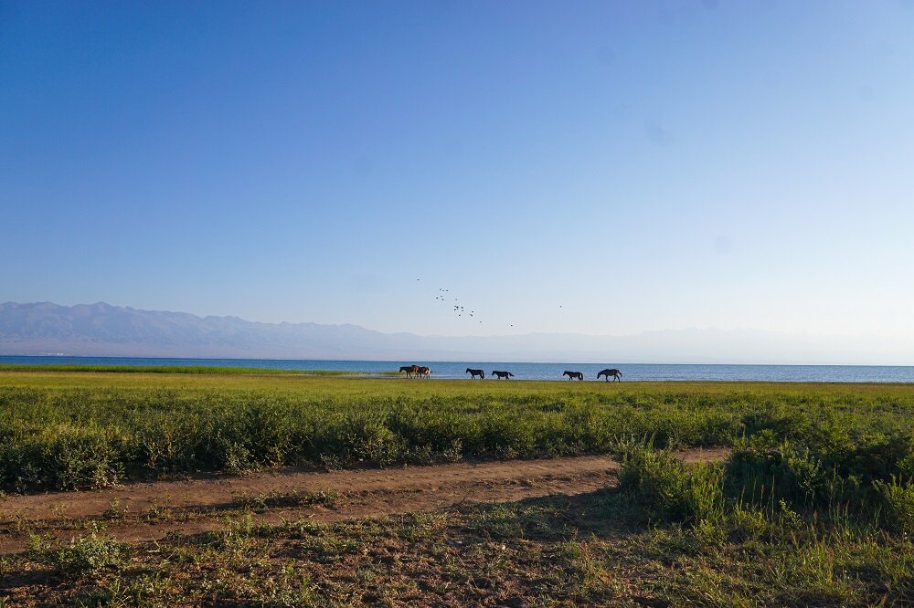 Horses grazing along the Issyk-Kul shore