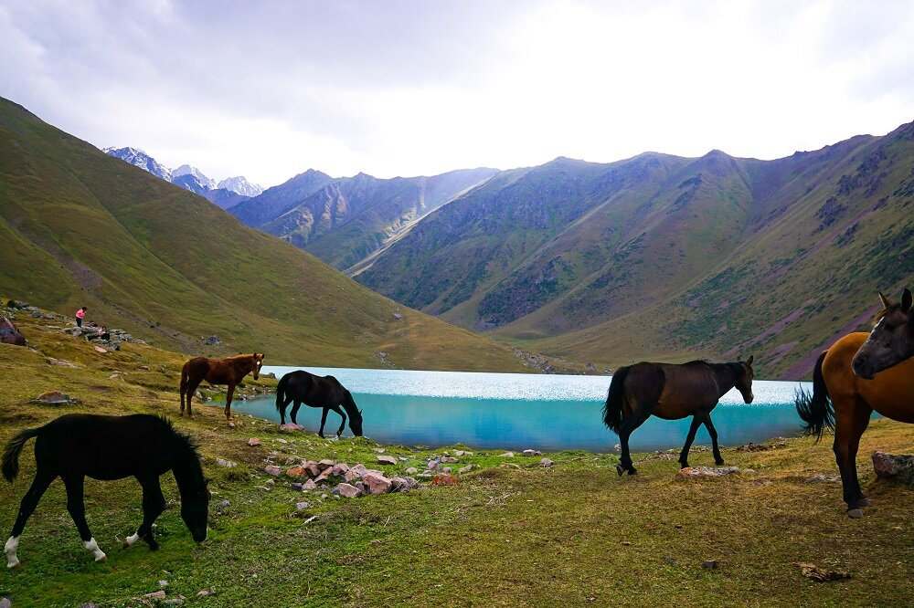 Horses passing by as we camped the night at Kol-Tor Lake.