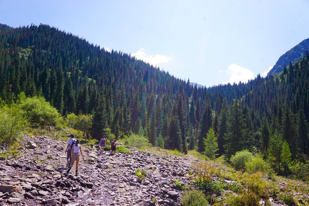 Needle-like coniferous trees seems to be the iconic feature of Kyrgyzstan's mountainscapes.