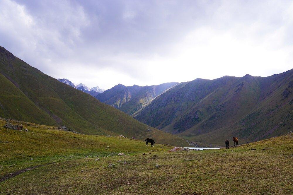 Horses seen grazing at Kol-Tor Lake.