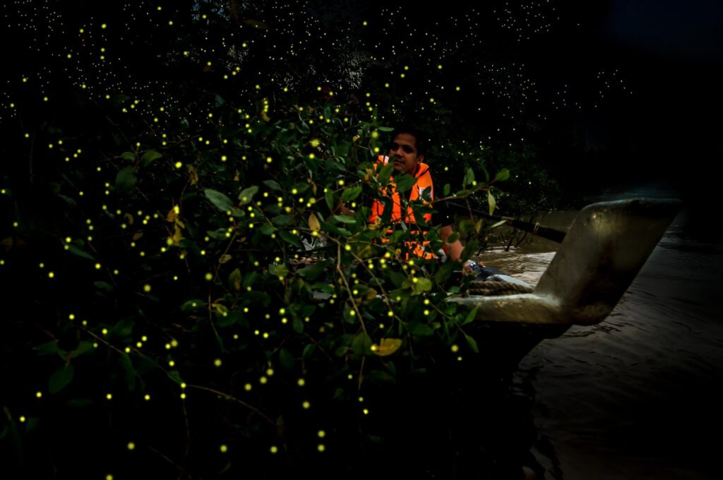 The Kampung Kuantan Fireflies Park is one of the tourist attractions in Selangor. — Picture by KUALA SELANGOR DISTRICT COUNCIL