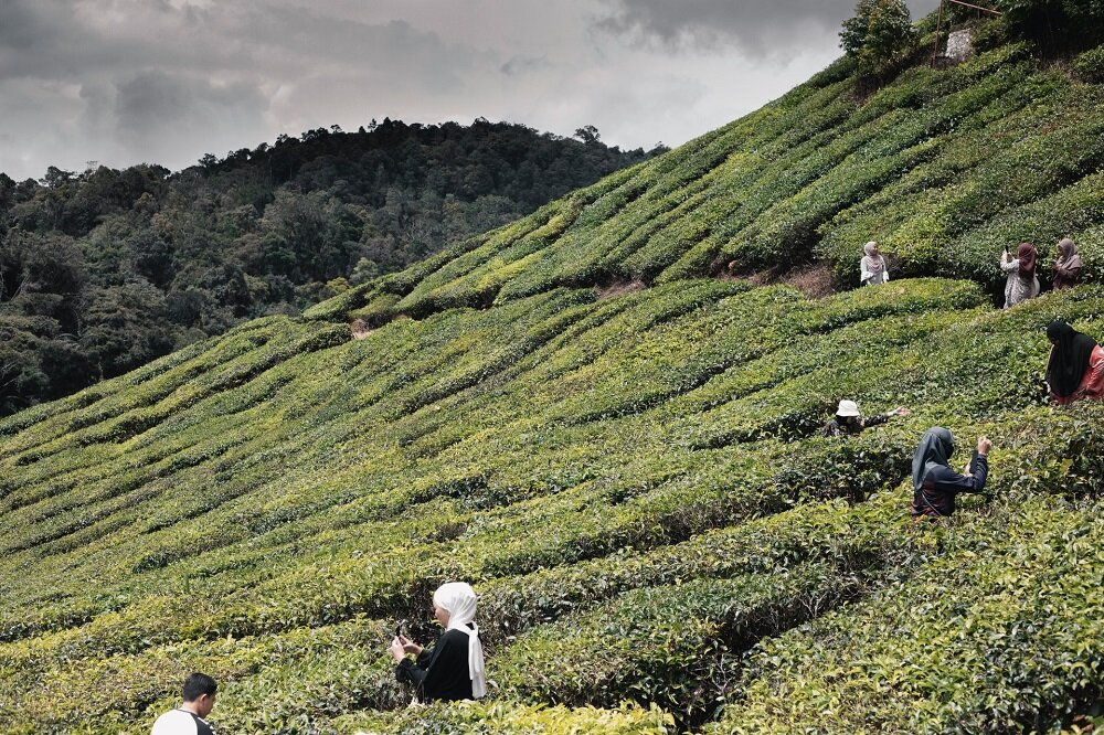 cameron-highlands-short-getaway-in-malaysia-weekend-trip.jpg