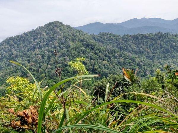 trans-bukit-chenuang-best-hiking-trails-near-in-KL.jpeg
