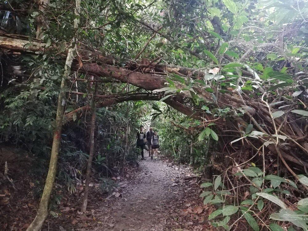 A sunrise hike covered in a blanket of stars and windy terrain makes Gunung Angsi the perfect breezy hike