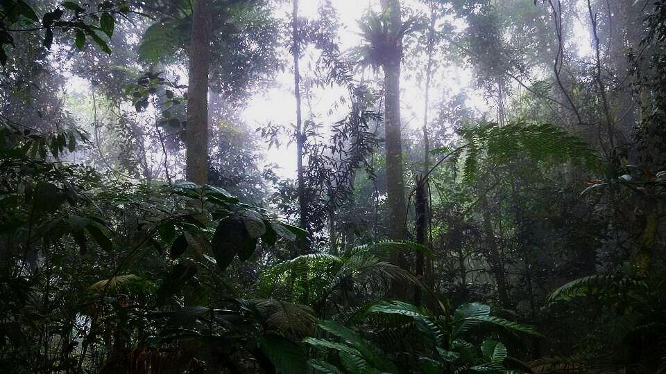 Gunung-nuang-best-hiking-trails-in-near-KL.jpg
