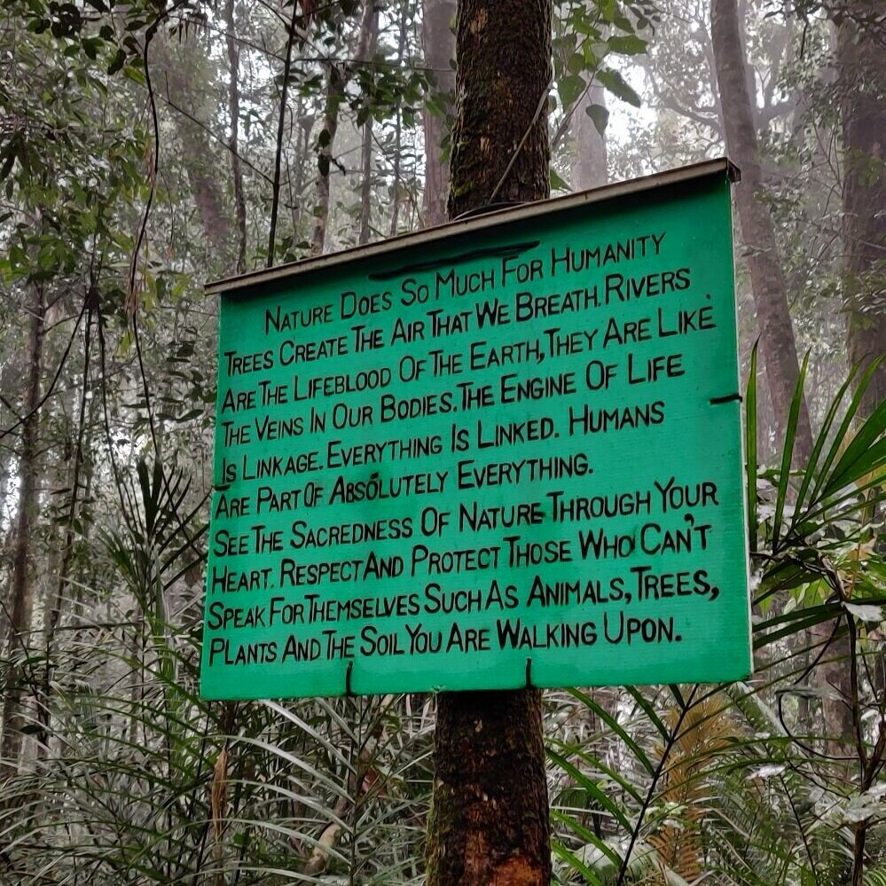 Pine-tree-hill-fraser-hill-day-hike-malaysia.jpg