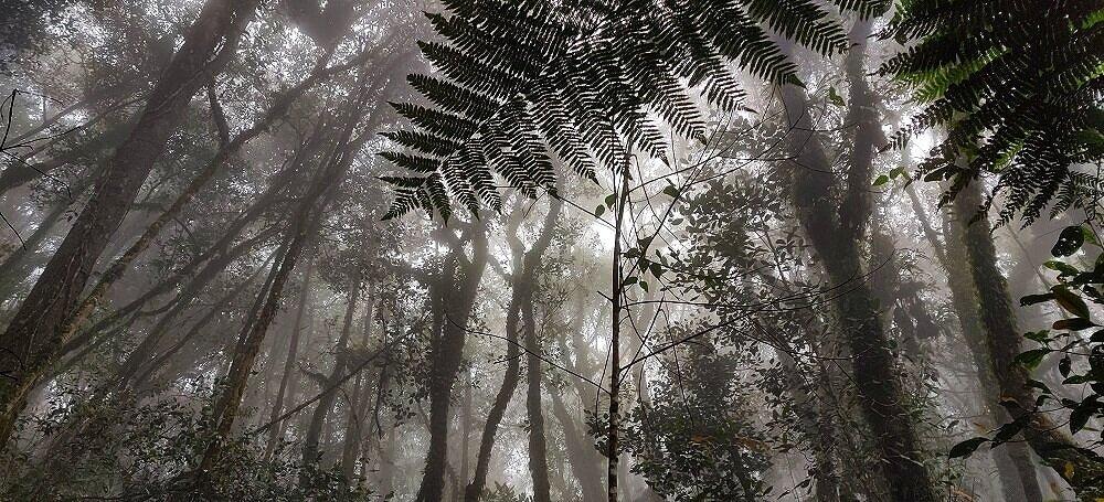 Pine-Tree-Hill-Fraser-Hill-Hiking-Malaysia.jpg