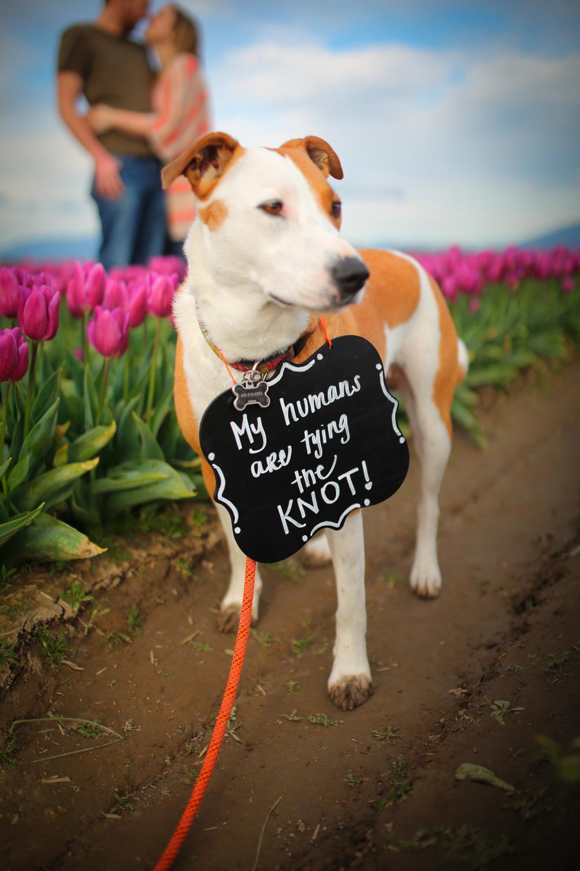 Engagement Photos Tulip Fields LaConner Washington02.jpg