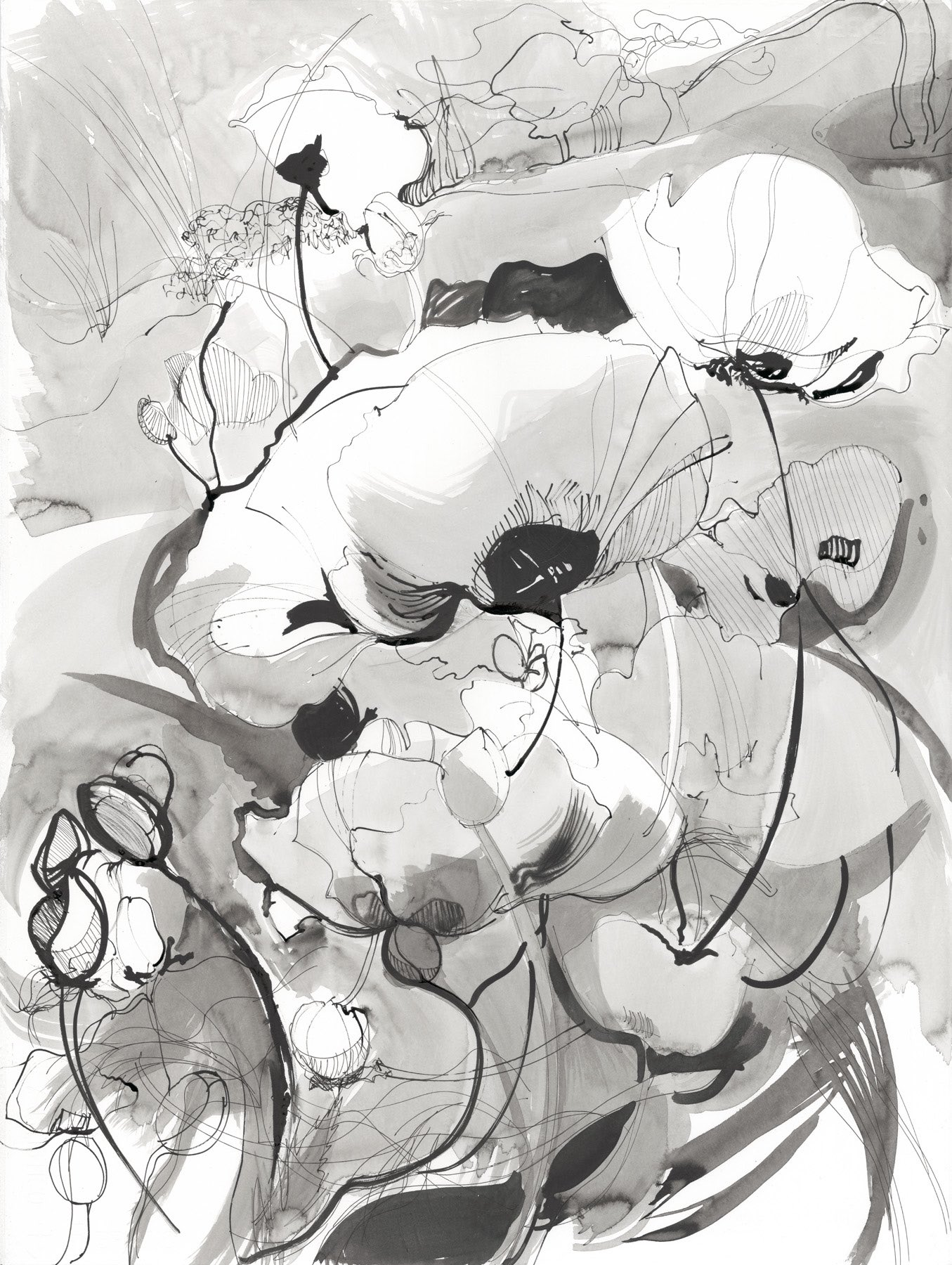 Poppydraws