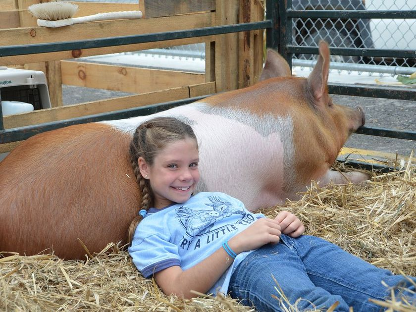 Grade 3 student Megan Bumstead, 8, uses her pig Cinnamon as a pillow at the 165th Sydenham Fall Fair at East Ridge Community School on Thursday, September 20, 2018 in Owen Sound, Ont. The fair is one of the last school-based fairs in Canada. Rob Gowan/The Owen Sound Sun Times/Postmedia Network