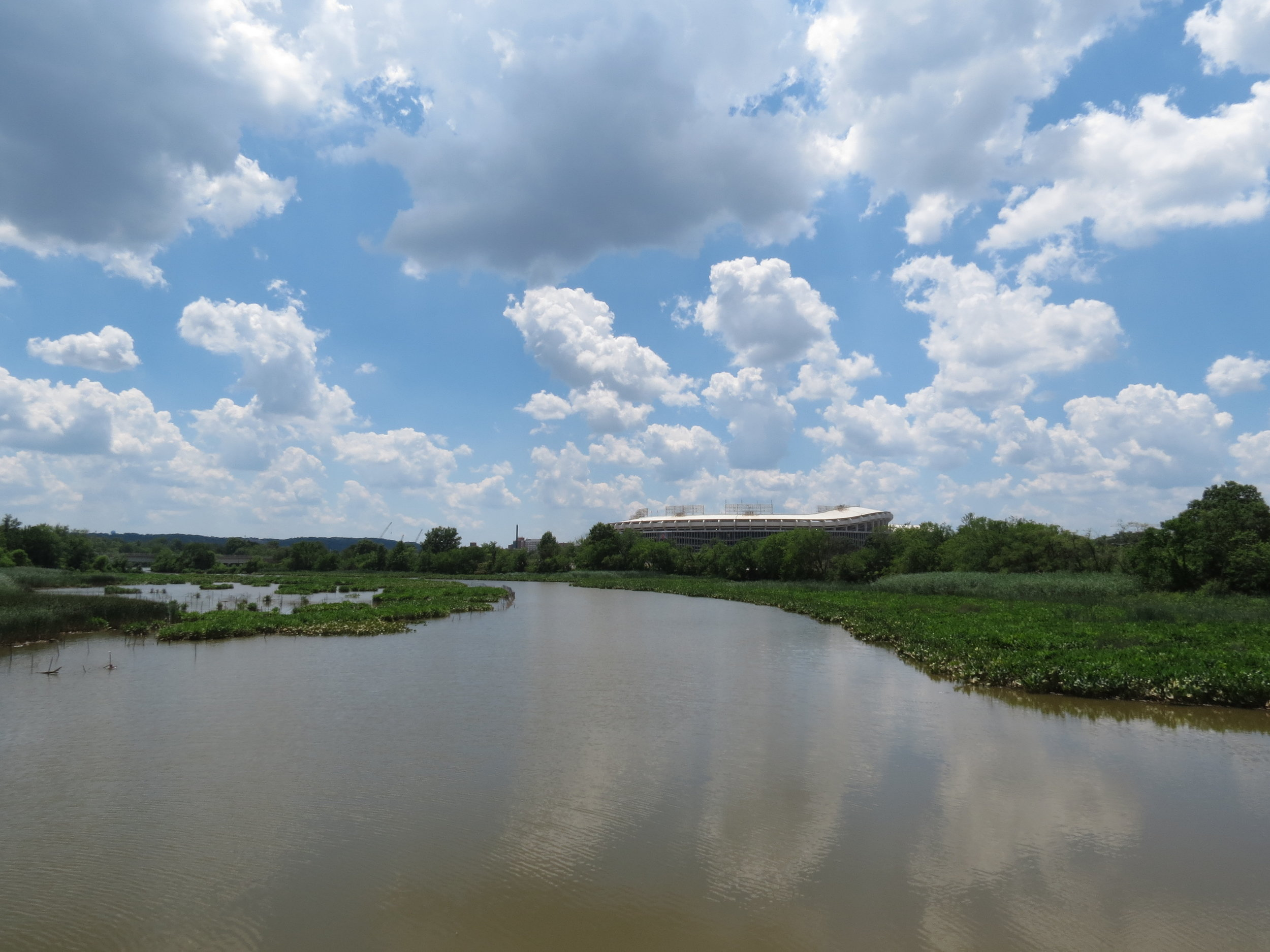 By  Katja Schulz  from Washington, D. C., USA (Anacostia River near Heritage Island) [CC BY 2.0 (https://creativecommons.org/licenses/by/2.0)], via Wikimedia Commons