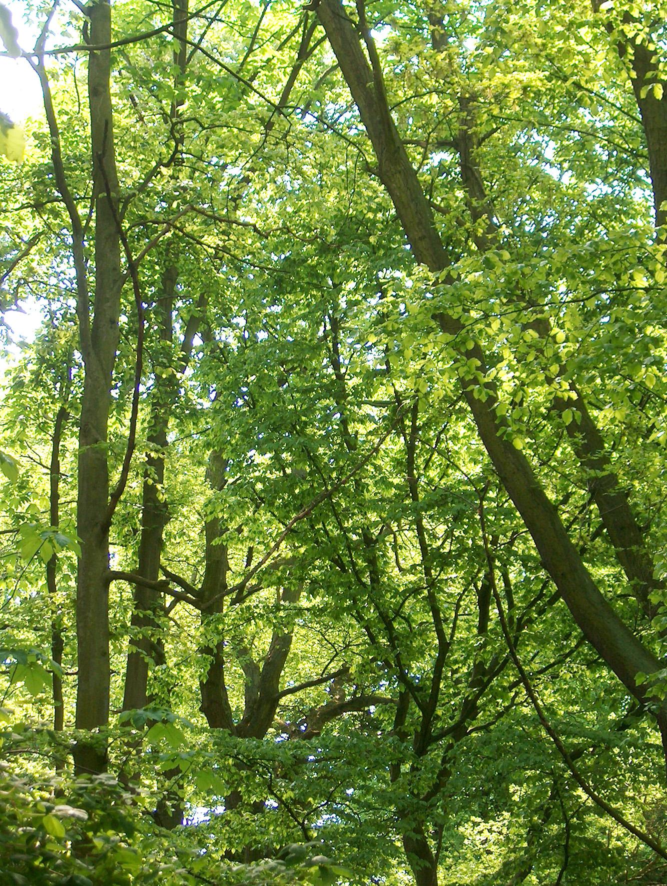 spring-green-1545004.jpg