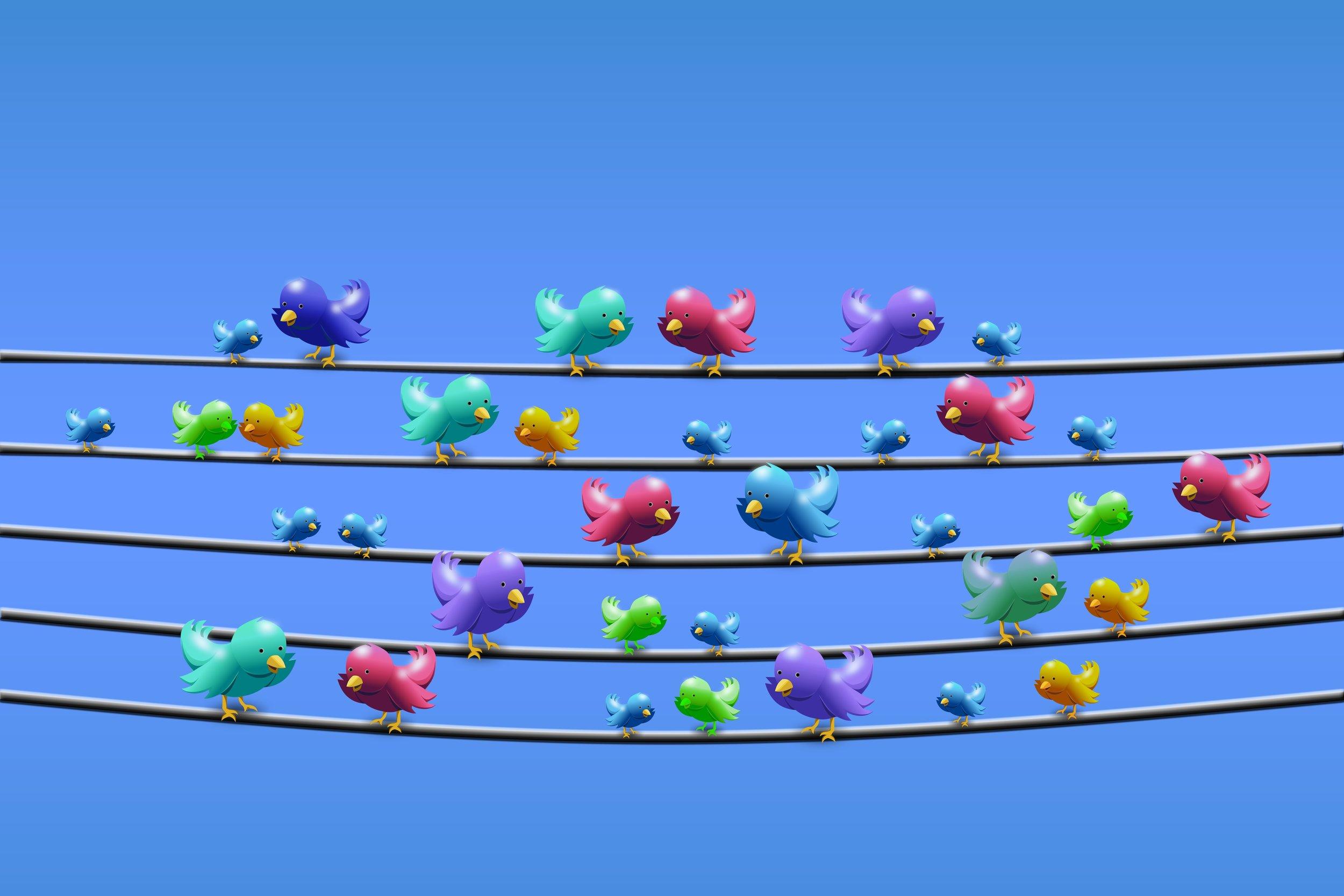 birds on a telephone line. . . tweeting
