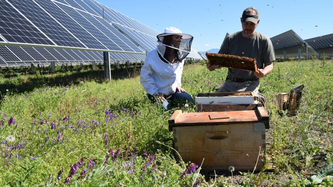 """Image:  Fast COMPANY . """"Using the space around the solar panels as sites for 48 hives, the Eagle Point solar farm is using its land to save pollinators and help local agriculture. """""""