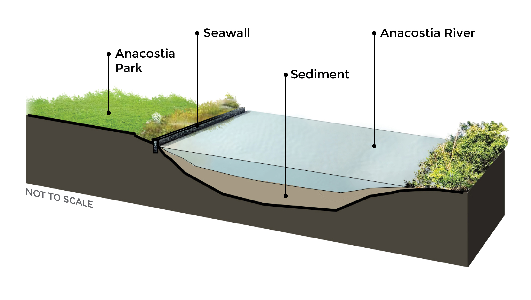 """This is a """"typical"""" diagram of the sediment at the bottom of the river. It is an illustration, not """"to scale"""". Anacostia Park runs along much of the river in the District but not all of it, and the seawall exists along much of the river but not all of it. The river and sediment depth varies."""