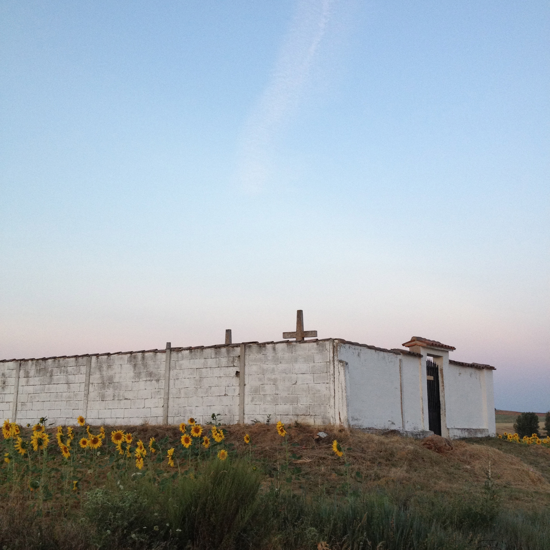 white_perspective_sunflowers.jpg