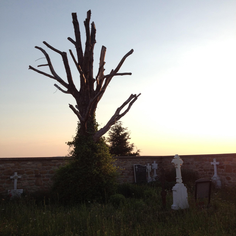 tree_within_sunrise.jpg