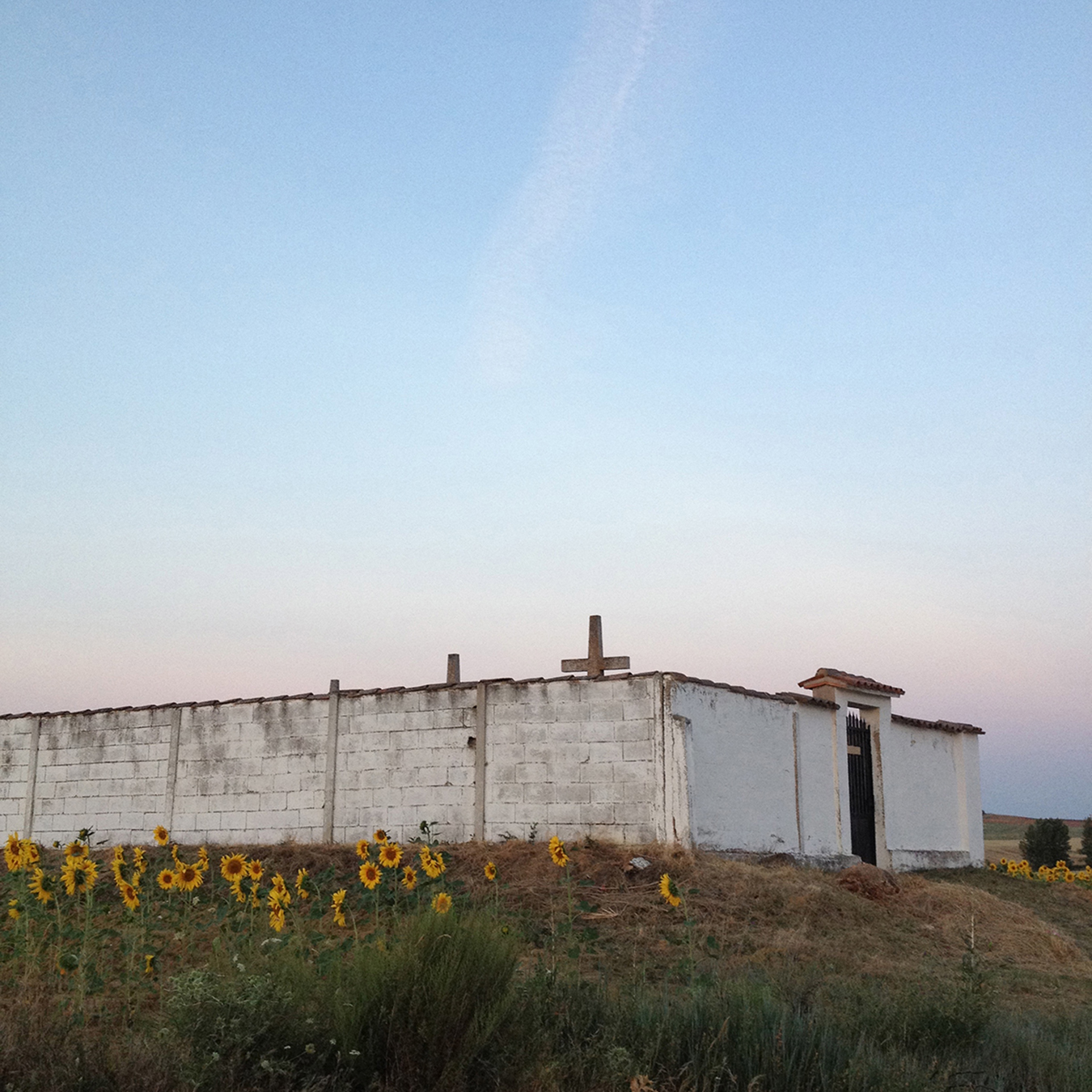 07_white_perspective_sunflowers_small.jpg