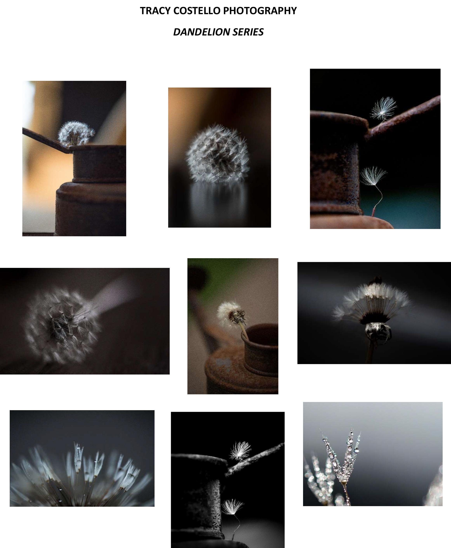 Dandelion Series.jpg