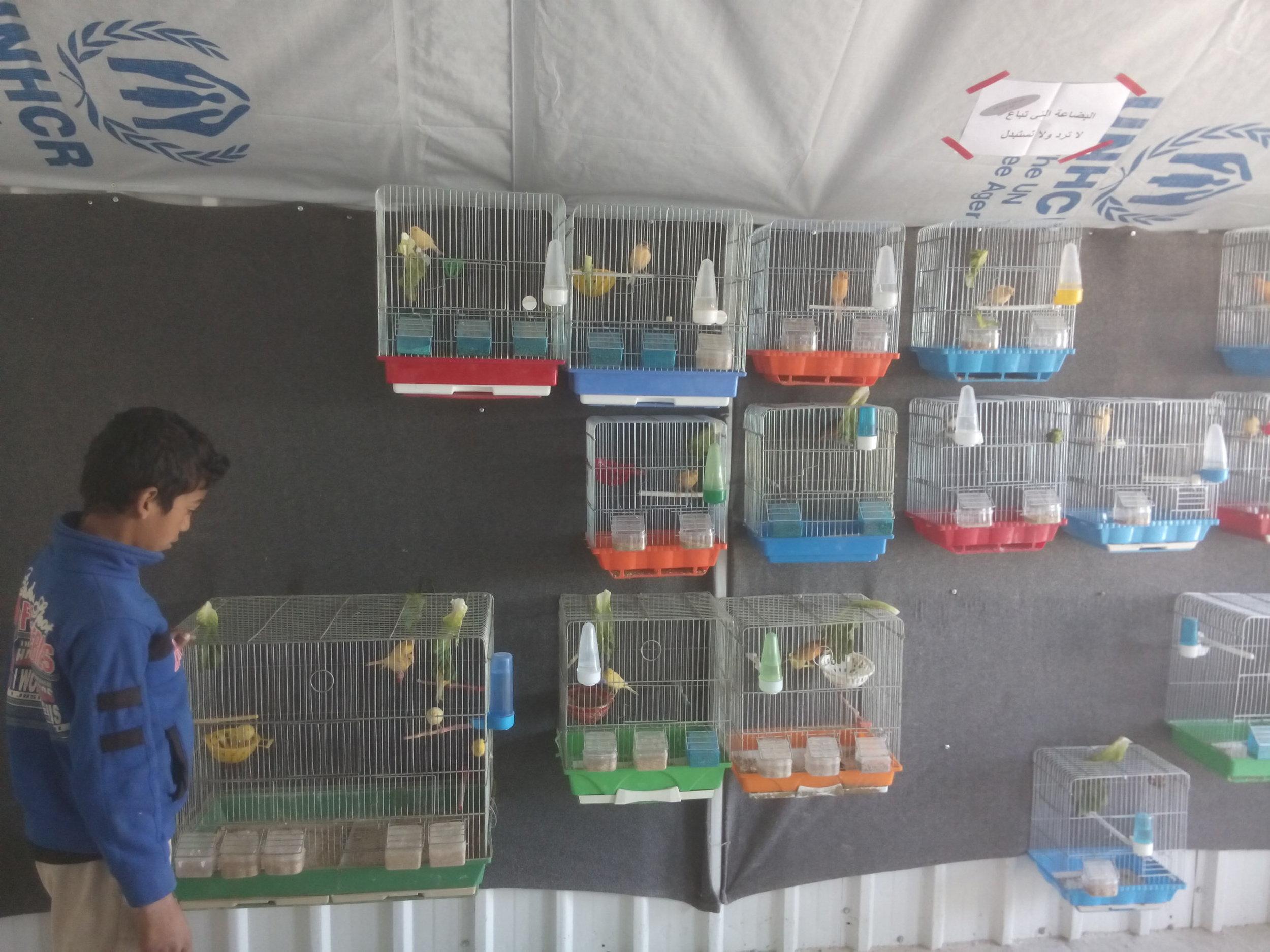 Caged birds for sale in Azraq camp, Jordan, November 2016 Photo: Ann-Christin Wagner (University of Edinburgh)