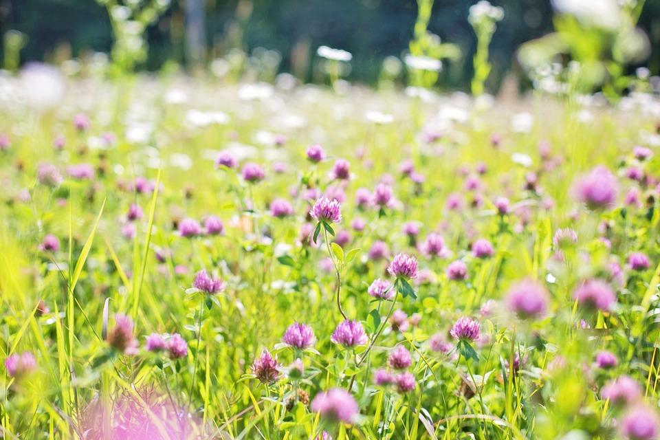 wildflowers-817179_960_720.jpg