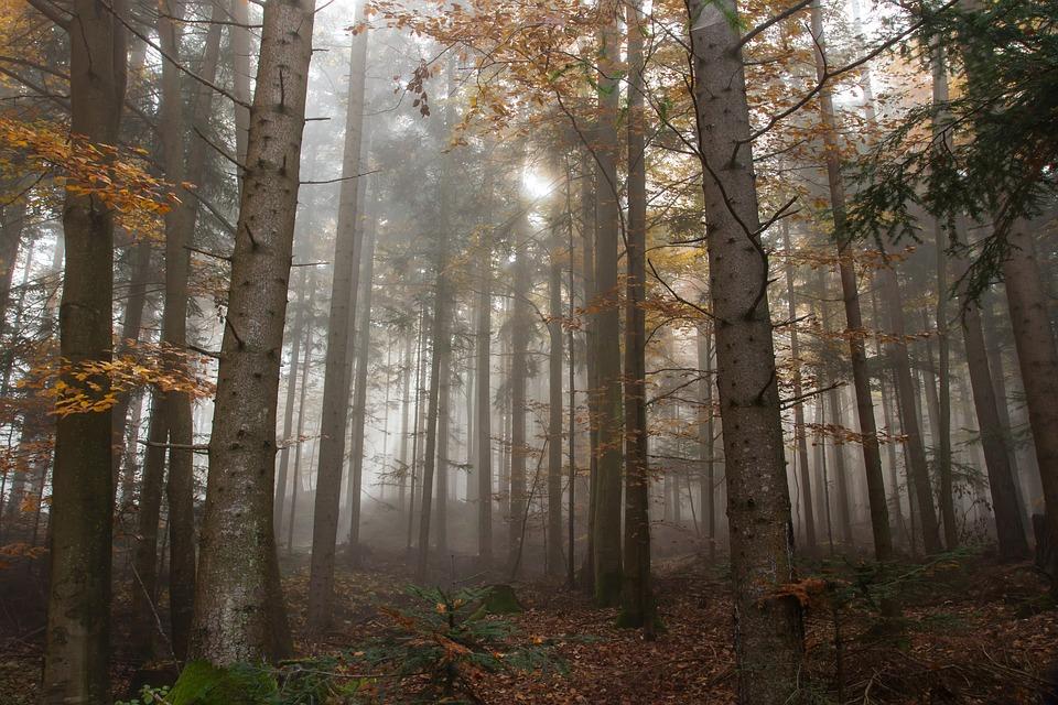 autumn-1127616_960_720.jpg