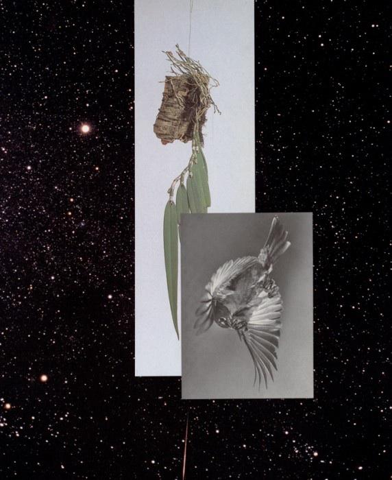 """Sechstagewerk_2014_5   Collage  11.7"""" x 9.4""""  2014"""