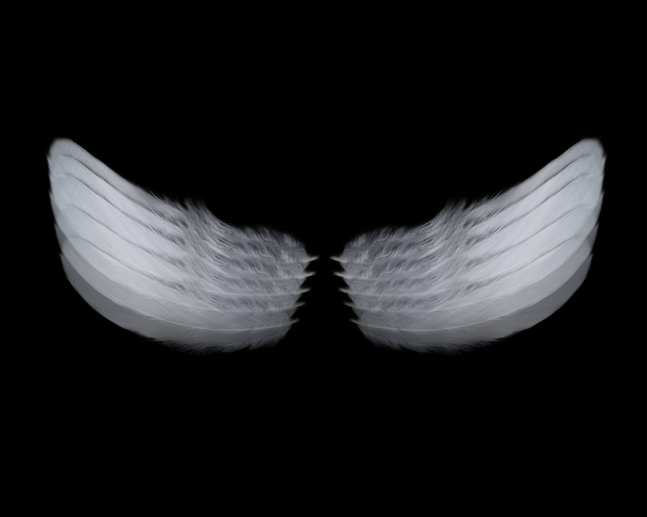 "Wings   Gelatin Silver Print  24"" x 30""  2017  Edition of 10/ 2 AP"